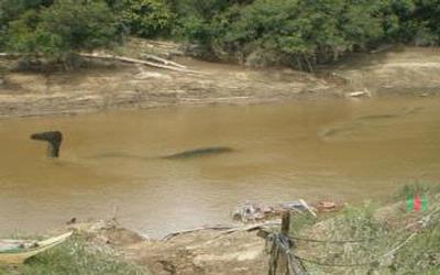 Inilah Foto Naga Ular Raksasa Di Sungai Mahakam Kaltim Bukan Omong Kosong