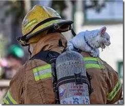 menyelamatkan kucing